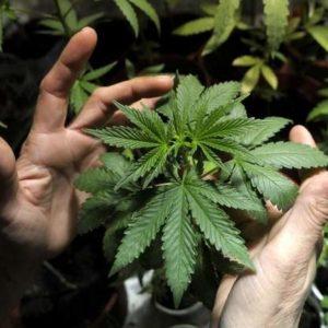 Storia della cannabis