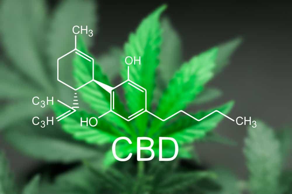 Cannabis light cosa c'è da sapere